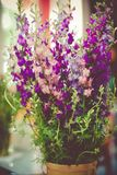 Blossoming of pink and violet flowers in spring time. Floral background Royalty Free Stock Photo