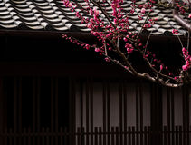 Blossoming plum branch in front of a Japanese house Royalty Free Stock Image