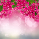 Blossoming Plum Flowers on sky background Royalty Free Stock Photo