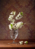 Blossoming plum in a glass vase Royalty Free Stock Photography