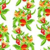 Blossoming pomegranate fruits Stock Image