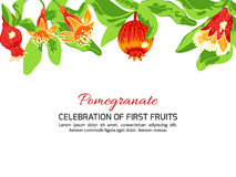 Blossoming pomegranate fruits Stock Images