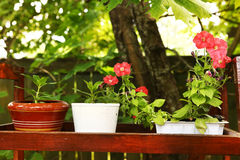 Blossoming pot plants on the wooden stand Royalty Free Stock Image