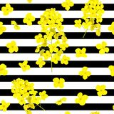 Blossoming Rapeseed Flowers Seamless Vector Pattern On Striped Black And White Background. Summer Print. For Textile. Stock Photo