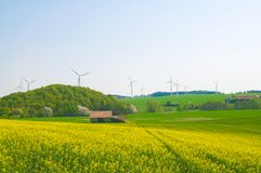 Blossoming rapeseed and windmills. Stock Photo