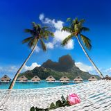 Blossoming rose in a hammock and a view of the sea, palm trees, the mountain. Tahiti Royalty Free Stock Photography