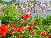 Blossoming roses on a blurred background of rural houses stock photos