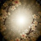 The blossoming sakura Stock Photo