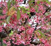 Blossoming Sakura and bird in  autumn Japanese garden. Royalty Free Stock Photo