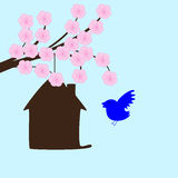 Blossoming sakura and bird house Stock Photo