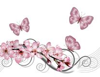 Blossoming sakura cherry branch with pink flowers Royalty Free Stock Photo