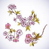 Blossoming sakura decorative elements Stock Photo