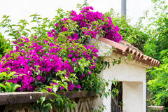 Blossoming spanish courtyard. Malgrat de Mar, province of Barcelona, Catalonia, Spain Stock Photos