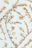 Blossoming spring branches of a fruit tree with white flowers on a white background Royalty Free Stock Image
