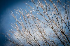 Blossoming spring branches Stock Photography