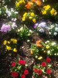 Blossoming spring flowers on a flowerbed Stock Image