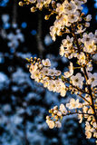 Blossoming Summer Flowers Stock Image