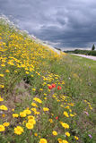 Blossoming summer meadow. At road before a rain Royalty Free Stock Photos