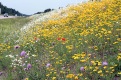 Blossoming summer meadow. At road before a rain Stock Photography