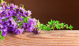 Blossoming thyme Stock Photos