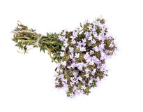 The blossoming thyme. Stock Photography