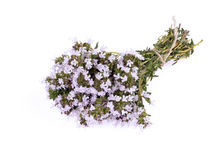 The blossoming thyme. Royalty Free Stock Photos