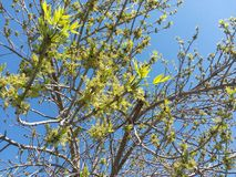 Seasons, tree, color, sky, blue, green, branches, leaf, spring, life royalty free stock photos