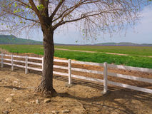 Blossoming tree along side white rail fence royalty free stock photos