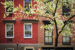 Blossoming tree, apartment building, Manhattan, New York City Stock Photos