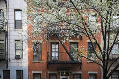 Blossoming tree, apartment building, Manhattan, New York City Royalty Free Stock Photography