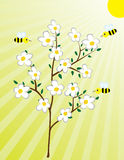 Blossoming tree and the bees Stock Image