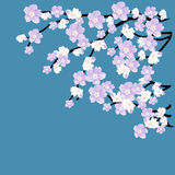 Blossoming tree branch on the blue background. Vector illustration Stock Images