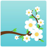 Blossoming tree branch Royalty Free Stock Photography
