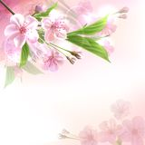 Blossoming tree branch with pink flowers. On bokeh background. Vector illustration Stock Images