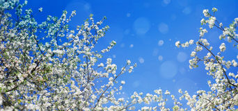 Blossoming tree branches on sky background. Stock Photos