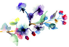 Blossoming tree brunch. Watercolor illustration Stock Images