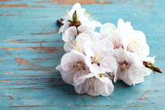 Blossoming tree brunch with white flowers Royalty Free Stock Images