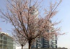 Blossoming tree at business hub, MILAN Stock Photo