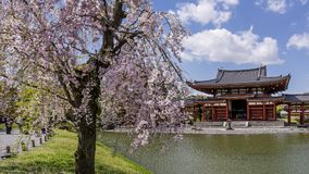 Blossoming tree at the Byodo-In Temple in Uji, Kyoto, Japan in spring season stock image