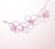 Blossoming tree flowers. Line art hand drawing. spring stylish background with pink flowers outline Royalty Free Stock Photography