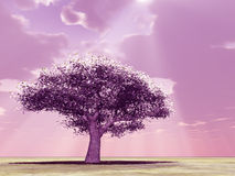 Blossoming tree in the god rays Royalty Free Stock Image