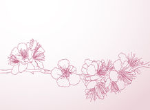 Blossoming tree line art hand drawing. spring stylish background Stock Images