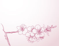 Blossoming tree line art hand drawing Royalty Free Stock Image