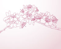 Blossoming tree line art hand drawn illustration Royalty Free Stock Photo