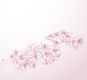 Blossoming tree line art hand drawn illustration Royalty Free Stock Photos