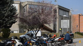 Blossoming Tree Near Motorcycles stock video footage