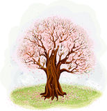 Blossoming tree. Vector illustration of a blossoming old tree in the meadow Stock Photo