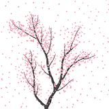 Blossoming tree in pink colors on a white background. Arrival of spring Stock Photo