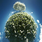 Blossoming tree on small planet Stock Photo