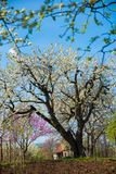 Blossoming tree in spring Stock Images
